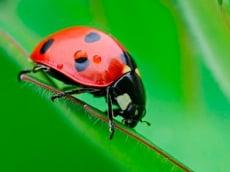 Ladybug Match3