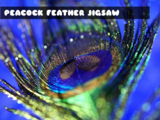 Peacock Feather Jigsaw